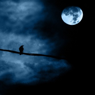 A raven, perched on a branch, peers up at the full moon on a cloudy night.